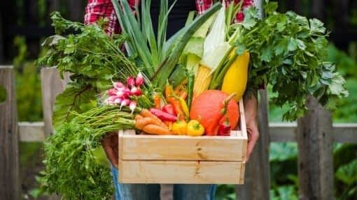 crate of locavore mixed vegetables