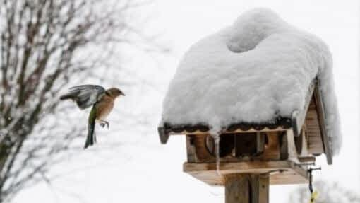 recycled bird feeder ideas